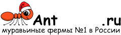 Муравьиные фермы AntFarms.ru - Пермь